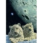 Puzzle  Grafika-Kids-01667 Magnetische Teile - Schim Schimmel - Lair of the Snow Leopard