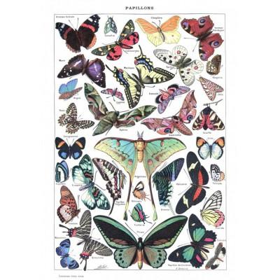 Puzzle  Grafika-00588 Illustration du Larousse pour Tous: Papillons, 1907-1910