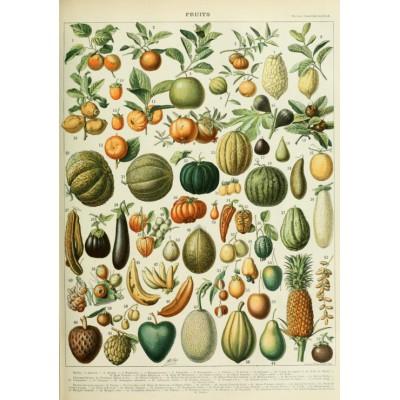 Puzzle Grafika-00592 Illustration du Nouveau Larousse Illustré: Fruits, XIXè Siècle