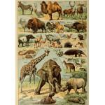 Puzzle  Grafika-00594 Illustrations du Larousse pour Tous: Mammifères, XIXè Siècle