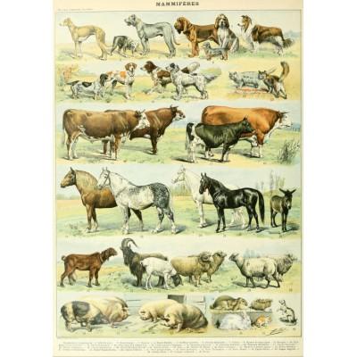 Puzzle  Grafika-00598 Illustration du Nouveau Larousse Illustré: Mammifères, XIXè Siècle