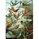 Puzzle  Grafika-00615 Ernst Haeckel: Les Trochilidés, 1904