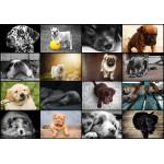 Puzzle  Grafika-01214 Collage - Hunde