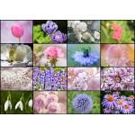 Puzzle  Grafika-01216 Collage - Frühlingsblumen