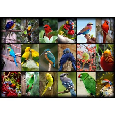 Puzzle Grafika-01223 Collage - Die schönsten Vögel der Welt