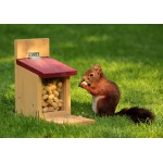 Puzzle  Grafika-01272 Eichhörnchen