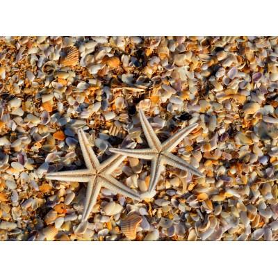 Puzzle  Grafika-01685 Muscheln und Seestern