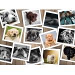 Puzzle  Grafika-02210 Hunde