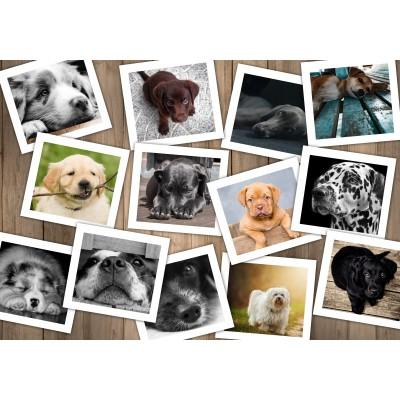 Puzzle  Grafika-02211 Hunde