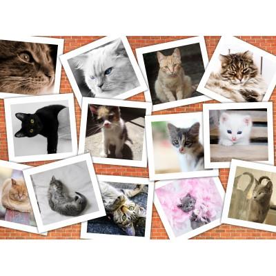 Puzzle  Grafika-02212 Katzen