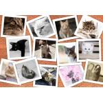Puzzle  Grafika-02213 Katzen