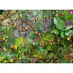 Puzzle  Grafika-02634 François Ruyer - Jungle