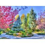 Puzzle  Grafika-02818 Bunter Wald, Colorado, USA
