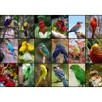 Puzzle  Grafika-T-00047 Collage - Die schönsten Vögel der Welt
