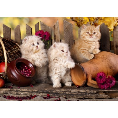 Puzzle  Grafika-T-00089 Persian kittens