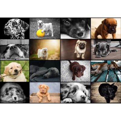 Puzzle  Grafika-T-00101 Collage - Hunde