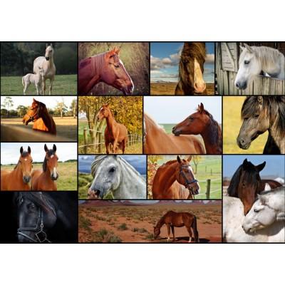 Puzzle  Grafika-T-00102 Collage - Pferde