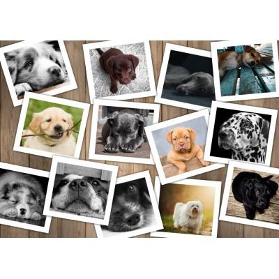 Puzzle  Grafika-T-00379 Hunde