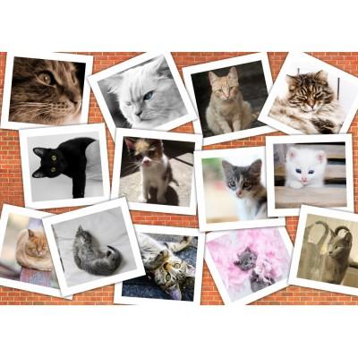 Puzzle  Grafika-T-00382 Katzen