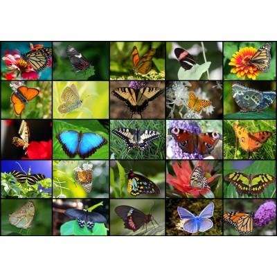 Puzzle Grafika-T-00623 Collage - Schmetterlinge