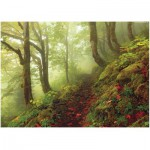 Puzzle  Heye-29519 Magic Forests Path