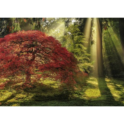Puzzle Heye-29855 Aaron Reed - Guiding Light