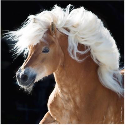 Puzzle  Heye-70173-29630 Pferd