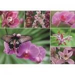 Puzzle  Jumbo-18354 Orchideen