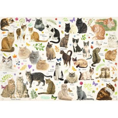 Puzzle Jumbo-18595 Collection Katzen Poster