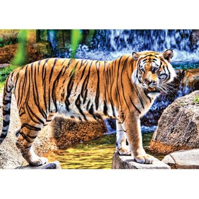Puzzle  KS-Games-10102 Amazing Tiger