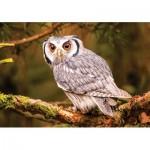 Puzzle  KS-Games-10104 Bengal Eagle Owl