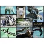 Puzzle  Nathan-86870 Zoo