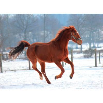 Puzzle  Nathan-86908 Pferd in der Schnee