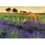 Puzzle  Nathan-87575 Felder der Provence