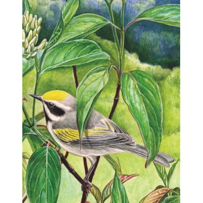 Puzzle  New-York-Puzzle-CB1860 Golden-winged Warbler Mini