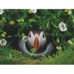 Puzzle  New-York-Puzzle-NG1991 Puffin Chick