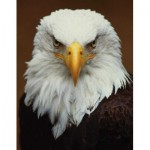 Puzzle  New-York-Puzzle-NG2028 Bald Eagle Mini
