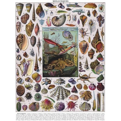 Puzzle  New-York-Puzzle-PD1711 Vintage Images - Mollusks