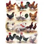 Puzzle  New-York-Puzzle-PD2177 XXL Teile - Poules - Poultry