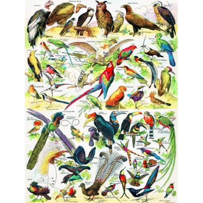 Puzzle  New-York-Puzzle-PD634 Birds - Oiseaux