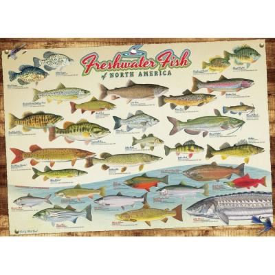 Puzzle  Cobble-Hill-51793-80094 Die Süßwasserfische Nordamerikas