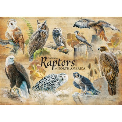 Puzzle  Cobble-Hill-80023 Common Raptors