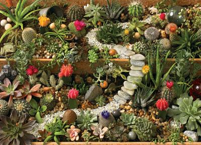 Puzzle  Cobble-Hill-80157 Succulent Garden