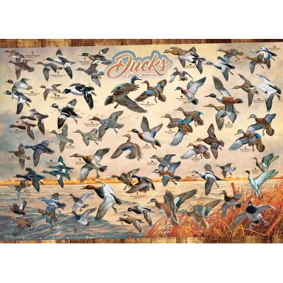 Puzzle  Cobble-Hill-80263 Ducks of North America