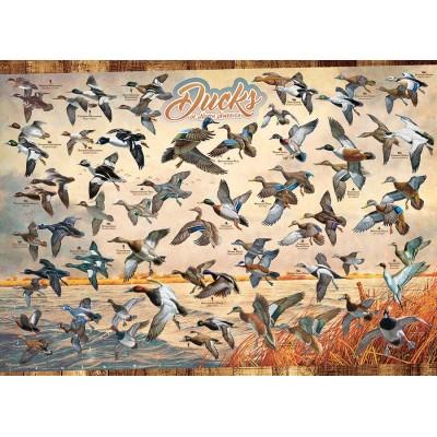 Puzzle Cobble-Hill-80263 Ducks of North America