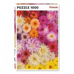 Puzzle  Piatnik-5518 Dahlien