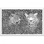 Pintoo-H1548 Puzzle aus Kunststoff 1000 Teile - Extrem: Leoparden