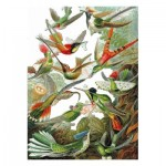 Puzzle-Michele-Wilson-A539-500 Holzpuzzle - Ernst Haeckel - Kolibris