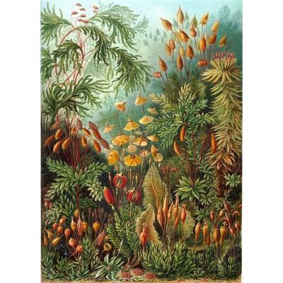 Puzzle-Michele-Wilson-A736-350 Holzpuzzle - Ernst Haeckel