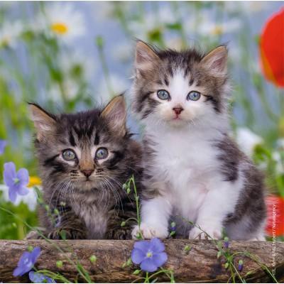 Ravensburger-08046 3 Puzzles - Kätzchen